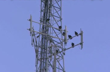 Cell Tower Radiation, Cell Tower Radiation Protection